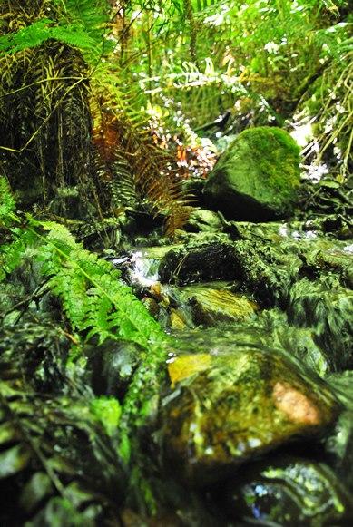 Mason Gulch Stream