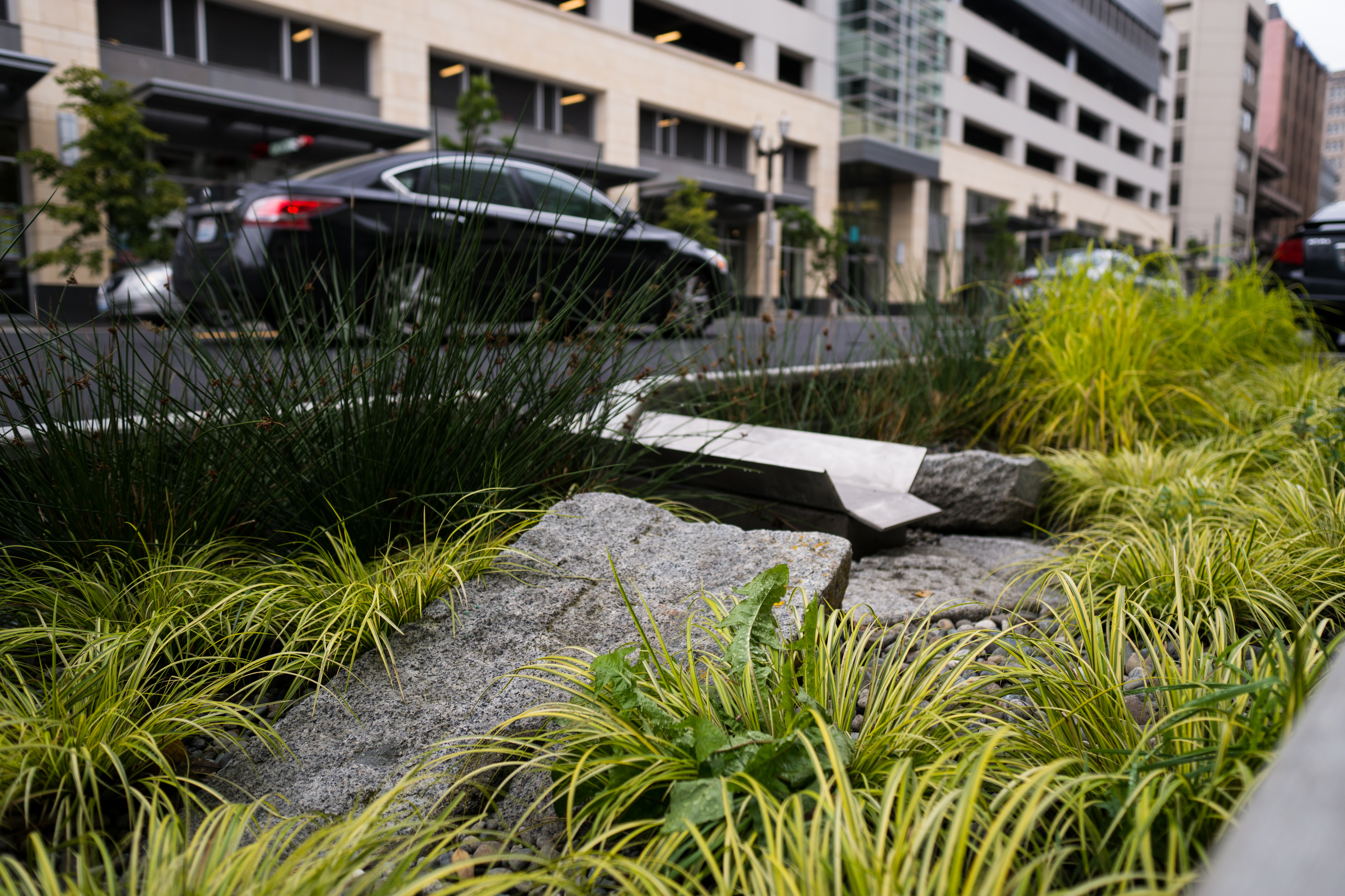 Streetside Rain Garden